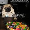 Vida de cão é dura...