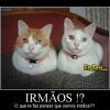 Irmãos?