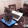 Que gatinho Obediente