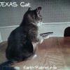 O gato pistoleiro