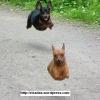 Super Cães!