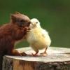 Compartilhando segredos!