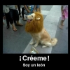 Sou um leão!