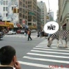 Zebra no asfalto