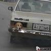 Porta cão!