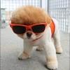 Cão Restart