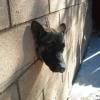 Cão na parede...