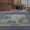 Carro com banheiro pra cachorro!