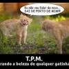 TPM felina!