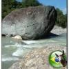 Pedra ou peixe?