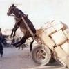 Levantando o burro!