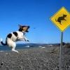Cão obediente!