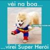 Cão herói!