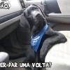 Quer dar uma volta?