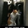 Gato viciado!
