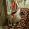 Onde está o gato?
