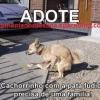Adote um animal!