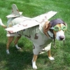 Cão aviador!