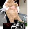 O Garfield existe!!
