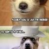 Dog Bieber