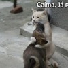 Consolando o amigo!