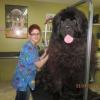 Cachorro gigante!