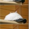 É um gato ou um boné?