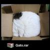 Gato.rar
