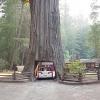 Estacionamento florestal!