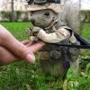 Capitão Esquilo