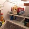 Quer levar o gatinho?