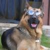Um cachorro com muito estilo!