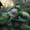 Um gato engraçado...