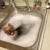 Antes de lavar a louça...