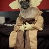 Super cão - Fantasiado de Mestre