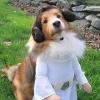 Super cão - Princesa Léa