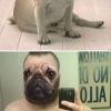 Homem Cachorro