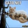 Gato Net