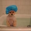 Hora do banho!