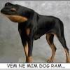 Dog-rã