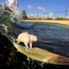 Praticando surf