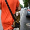 Macaco Bag