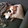 Cachorro fresco...