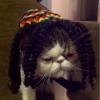 Gato do Bob Marley