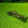 Camuflagem natural!