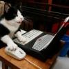 Gato Acessando o Facebook