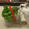 Tem coelho no mercado...