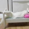 Essa sim é cama de gato!