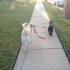 Levando pra passear...