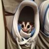 Tem um zoiudo no sapato...